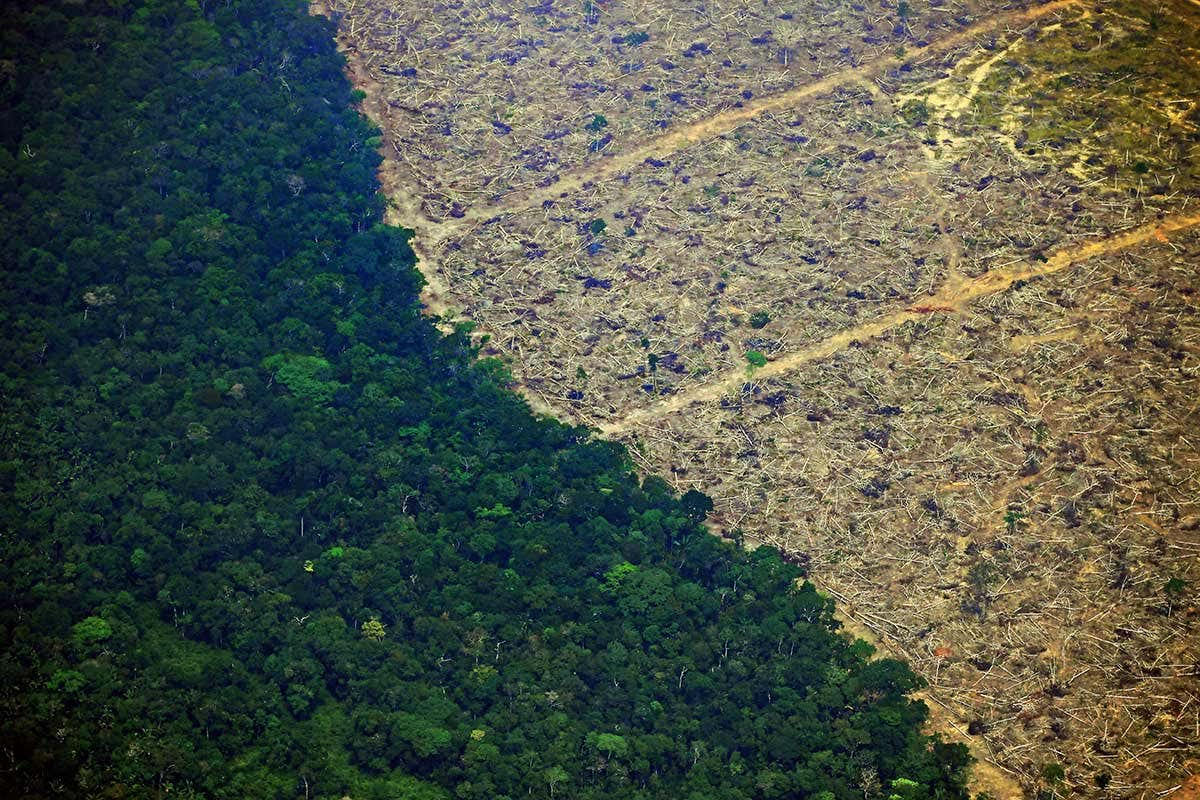 https://www.newscientist.com/article/2214734-its-officially-now-the-worst-ever-august-for-amazon-deforestation/